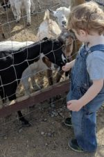 Tucson Petting Zoo and Funny Foot Farm